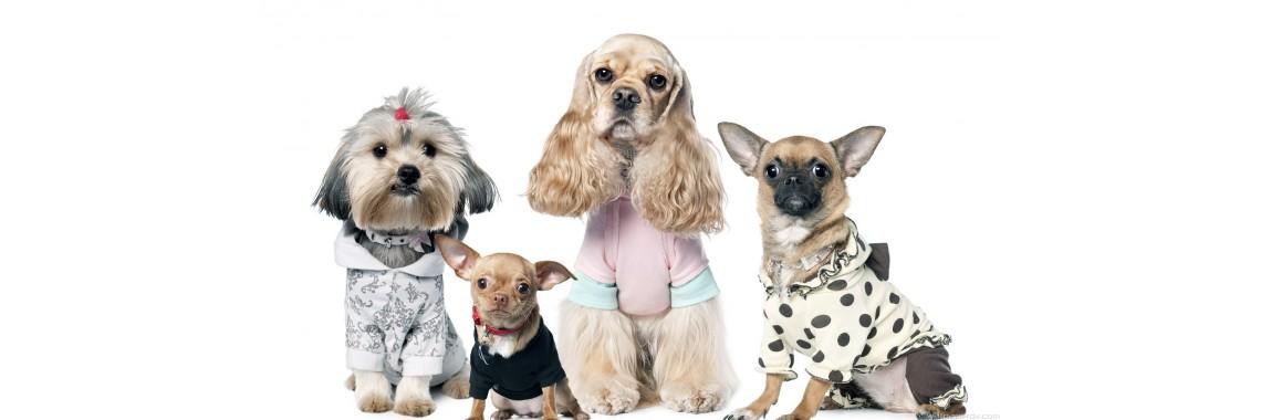 Летняя одежда на собак
